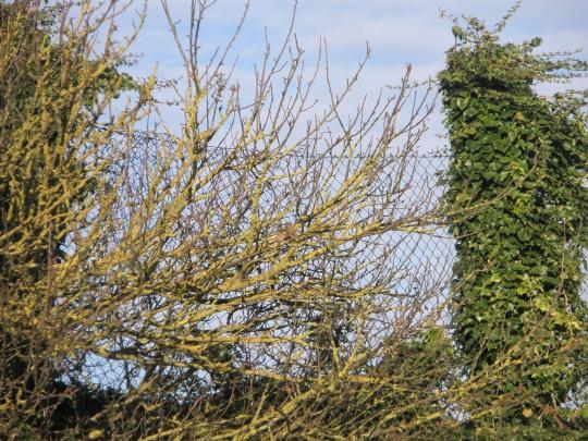 Spot the Birdie